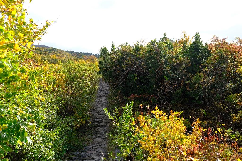 X-T3で撮影のレビュー・須川岳の紅葉の写真