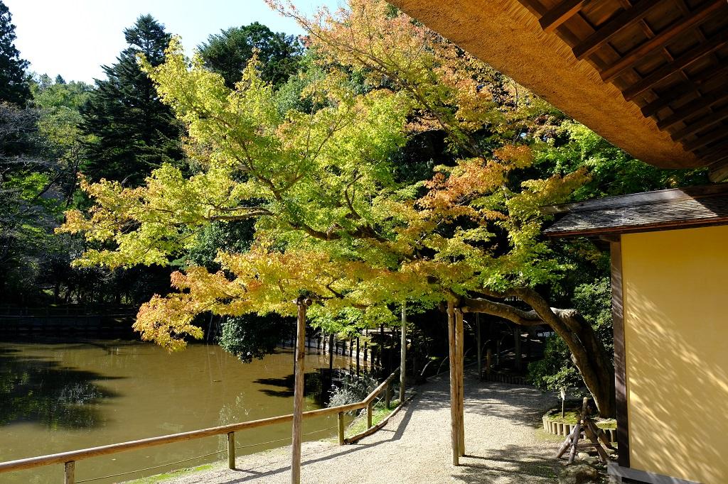 有備館の紅葉前の風景・有備館の建物内からの風景
