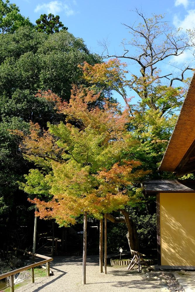 有備館の紅葉前の風景・有備館の建物の外から。