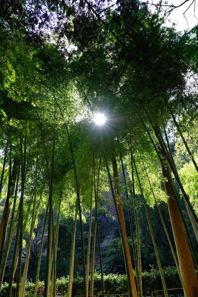 有備館の竹林の風景写真