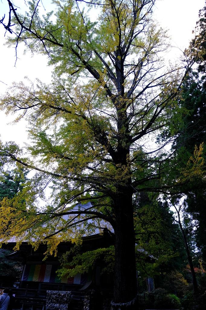 秋保大滝不動尊の秋の観光写真