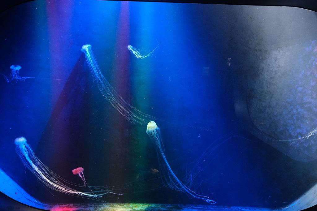 加茂水族館の魚やクラゲの写真