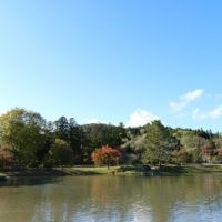 観自在王院跡の紅葉の風景写真