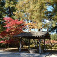 XF16-80mmF4 R OIS WRで撮影した毛越寺の紅葉の風景写真
