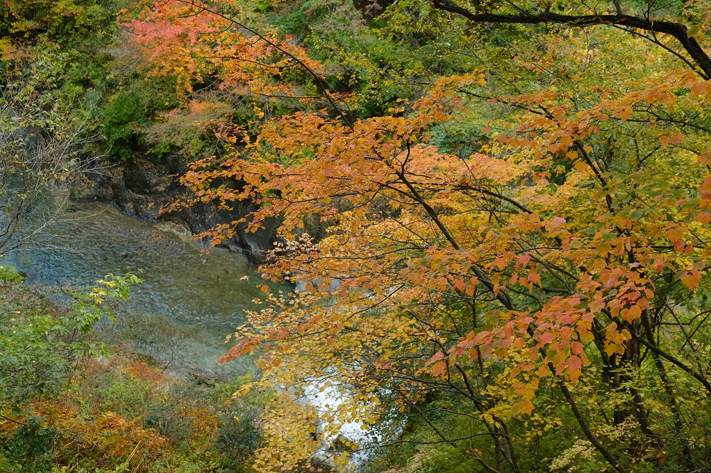 鳴子峡の紅葉の写真を遊歩道から撮影した写真
