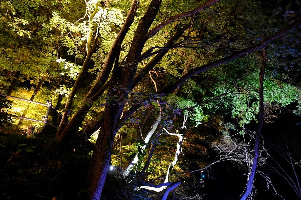 磊々峡のライトアップの風景写真