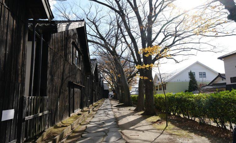 山居倉庫の秋のケヤキ並木の風景写真