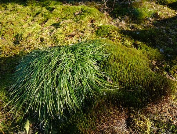 16-55mm杉苔と植物の写真