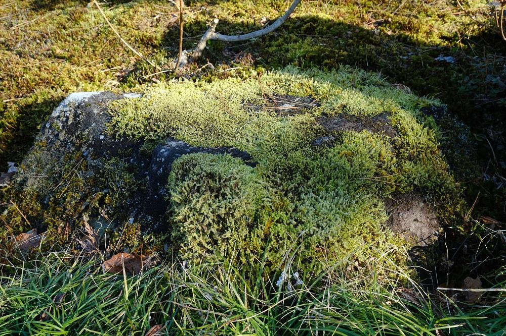 16-80mmで撮影の岩に張り付いた苔の写真