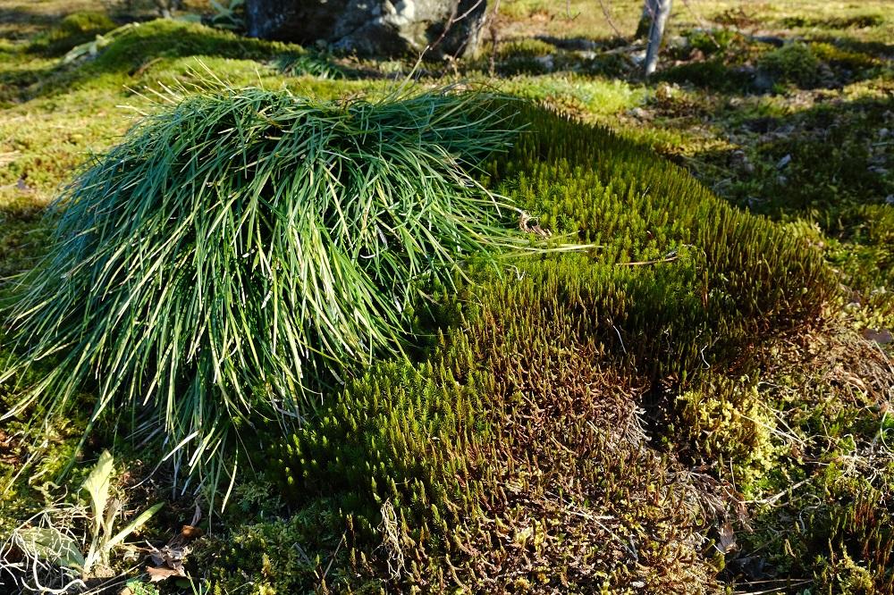 16-80mm杉苔と植物の写真