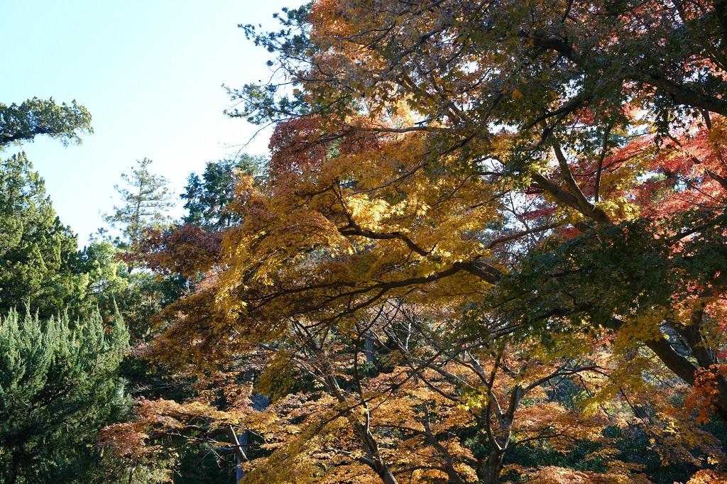 鎌倉円覚寺の紅葉の写真