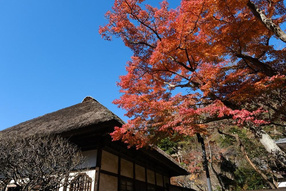 円覚寺の紅葉の写真