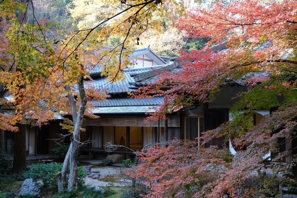 明月院の本堂裏庭園の写真