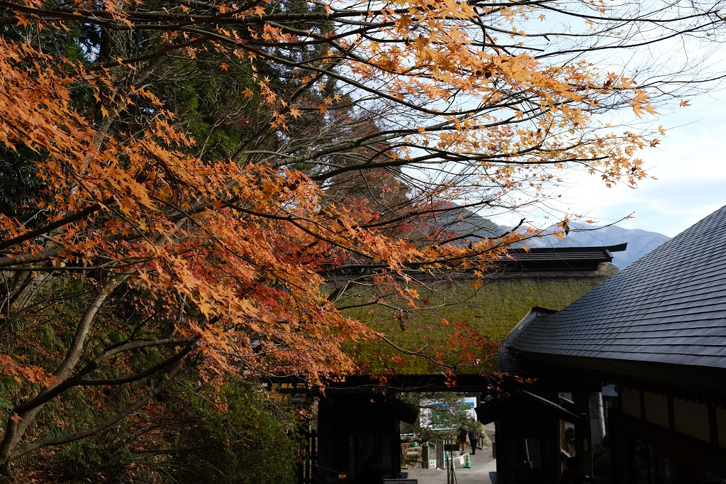 山寺立石寺の石段の道中の気になる写真