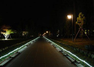 瑞巌寺の参道のライトアップ