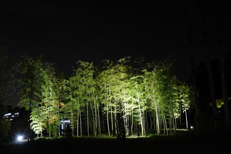 瑞巌寺のライトアップの写真