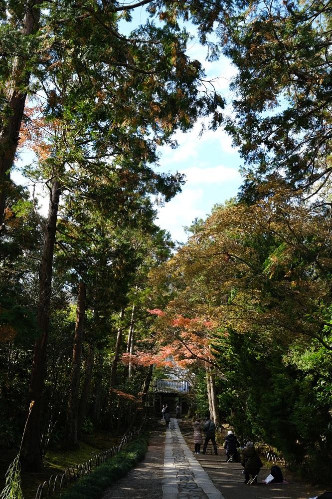 寿福寺の参道の風景の写真