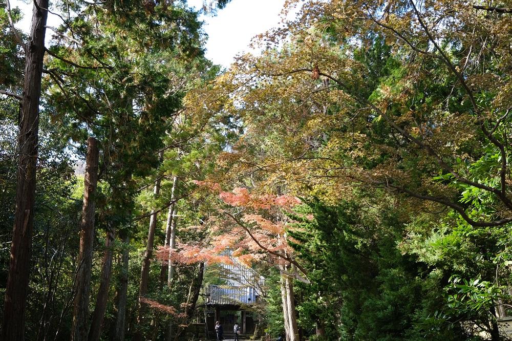 寿福寺の三小津の紅葉の写真