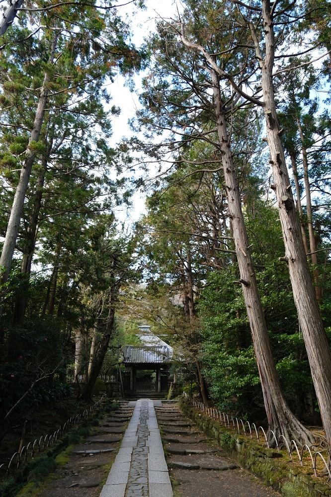 寿福寺の本堂までの参道の風景写真