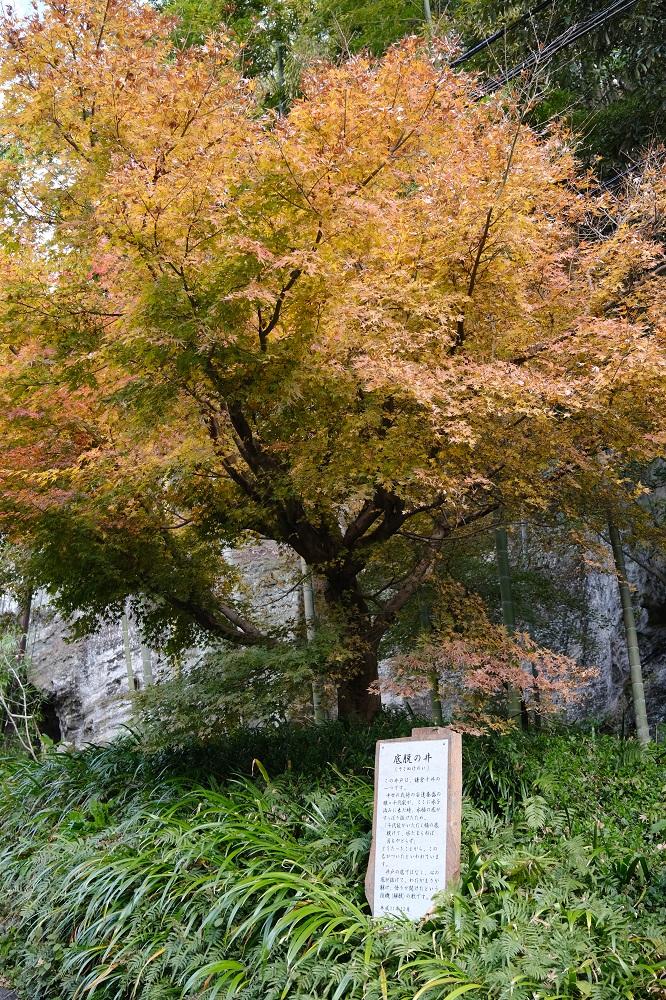 海蔵寺十六井戸の説明書きの写真