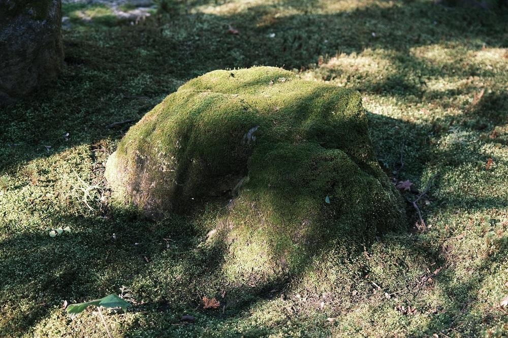 明月院の1月の苔の風景写真