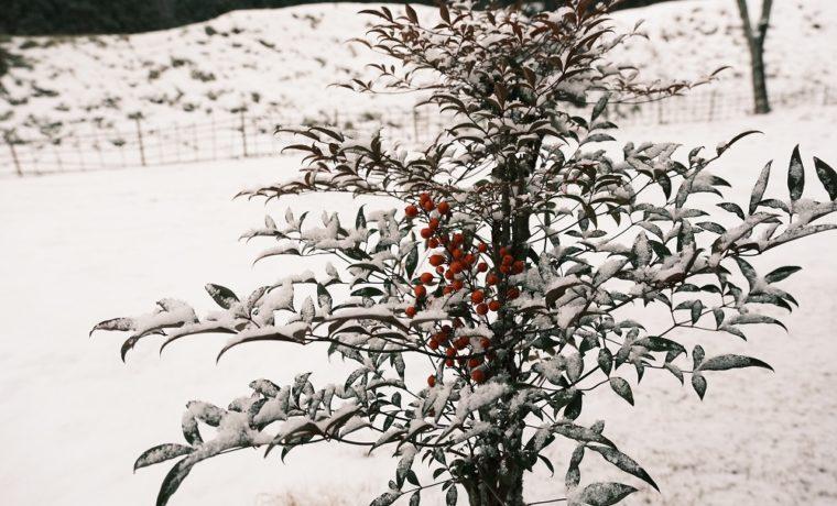 x-pro3で庭の風景の試し撮りの写真