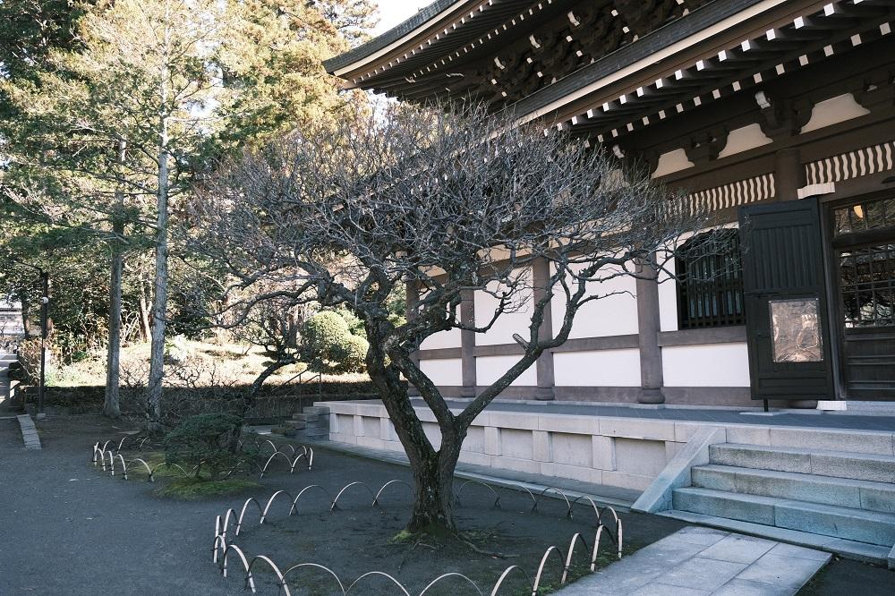 仏殿脇の梅の木の風景写真