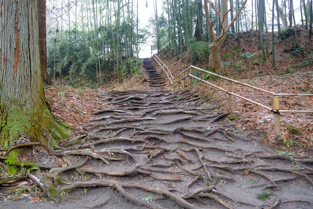 白山神社の参道わきの木の根の風景写真