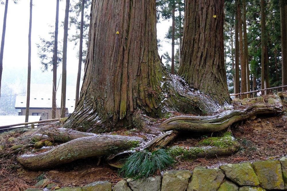 月見坂の大きな木の根の風景写真