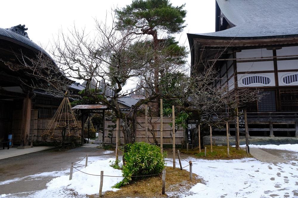 中尊寺の左わきの梅の木の写真