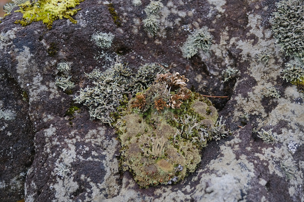 庭の苔の種類の写真