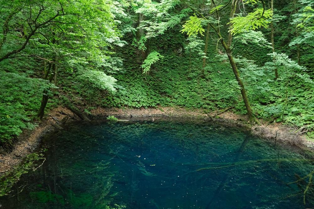 青池の不思議な青さの池の写真