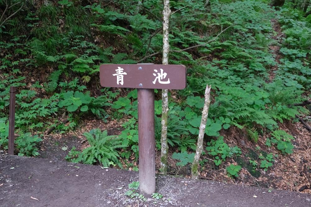 青池への遊歩道の入り口の写真