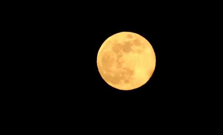 五月の満月花月の写真