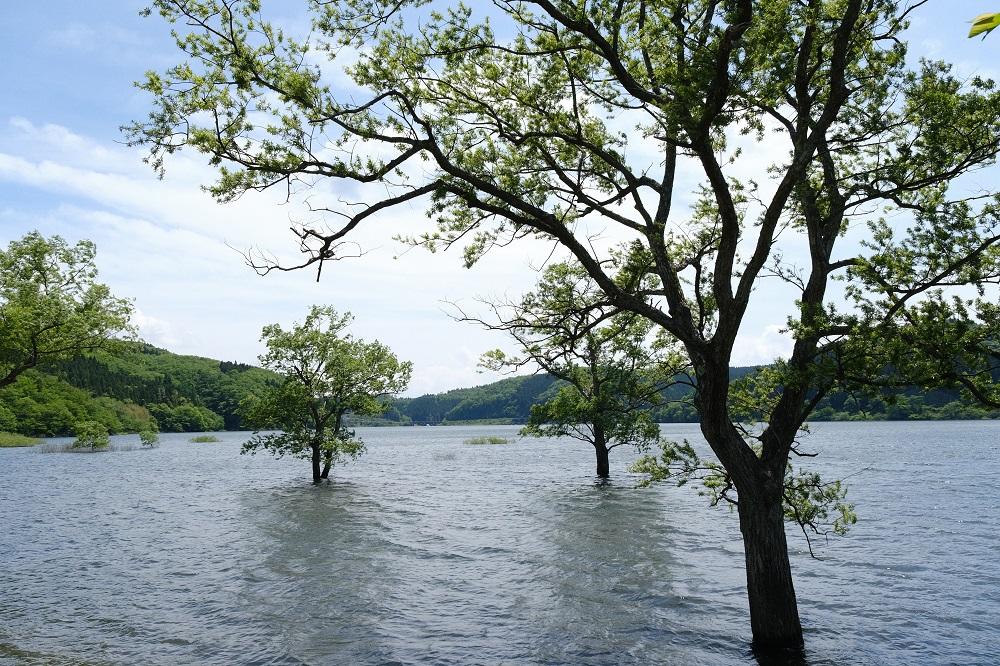 花山ダムの夏の気が水没した風景写真