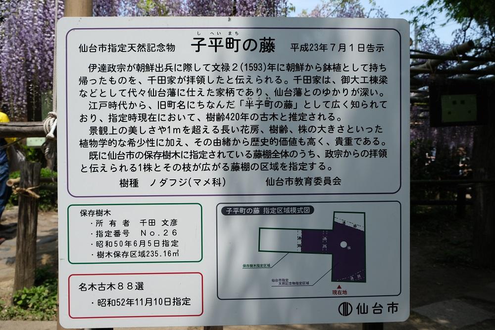 藤の花の名所子平町の藤の理の説明の写真