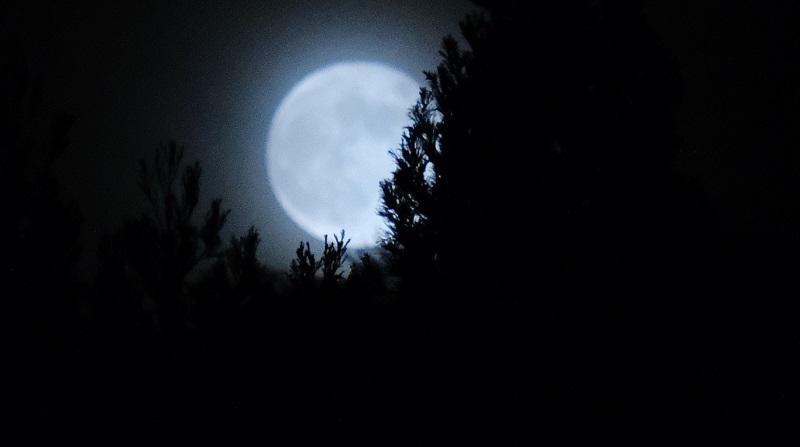 苺月(ストロベリームーンの写真