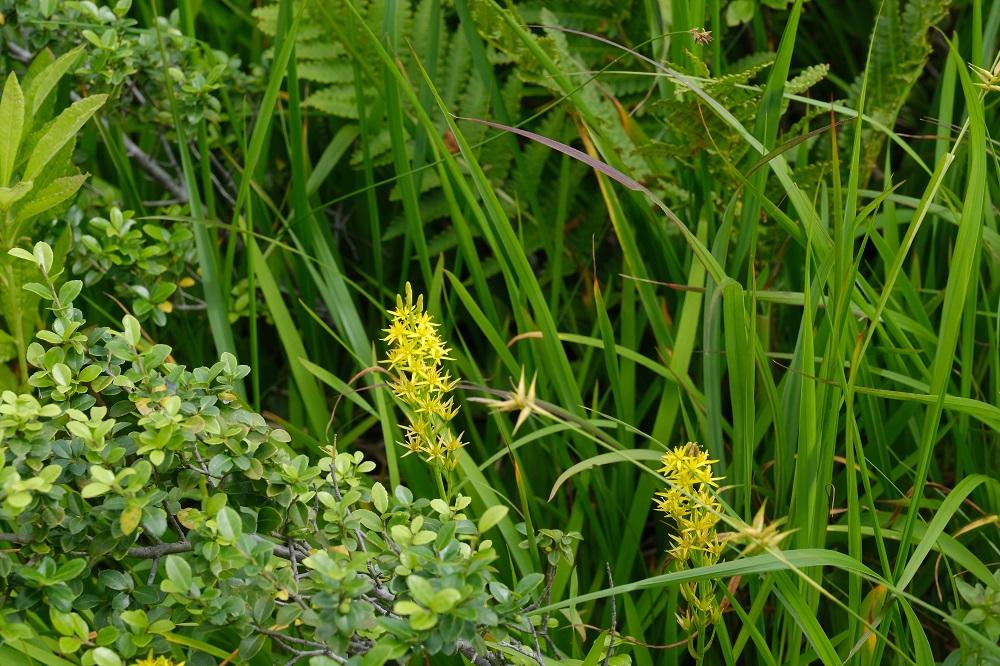 ブリーチバイパスで世界谷地原生花園を撮影