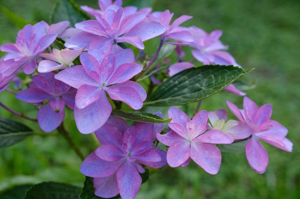 16-55F2.8で撮影した花の写真