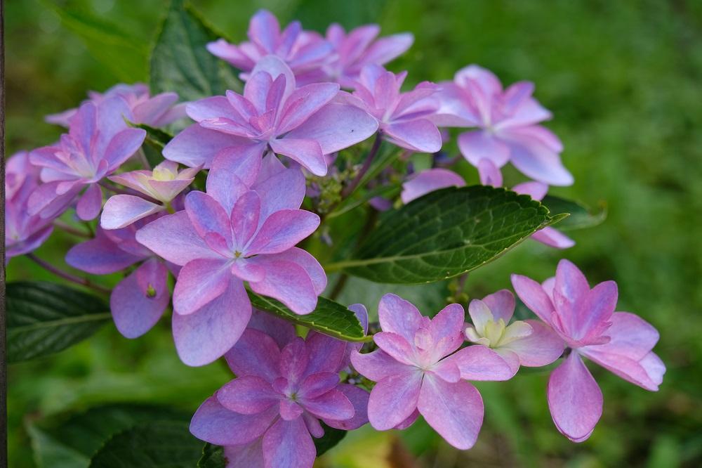 16-80F4で撮影した花の写真