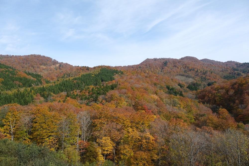 栗駒焼石ほっとラインの紅葉の写真